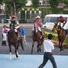 今週末は宝塚記念なので函館競馬場は若手騎手が狙い目?