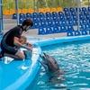 人気水族館のWebサイトはやっぱりすごい。