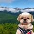 白馬岩岳マウンテンリゾート・2021夏の信州⑧