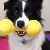 壊されても惜しくない!ダイソーの犬用おもちゃ。その2