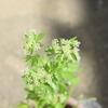 庭の小さい花と森の小さい実