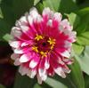 花の中に咲くお花