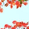 上野公園の紅葉②