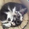 お猫様たち 換毛期キター。