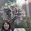 桜が満開2019 日本橋室町あじさい通りのおかめ桜