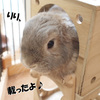 「うさぎと暮らすカレンダー 2010」