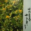 3月1日誕生日の花と花言葉