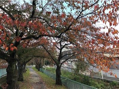 季節が進みます〜桜は紅葉し、日も短くなりました〜