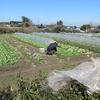 農園日誌ーグループ営農への試みーミニマムで壮大な試みPARTⅢ