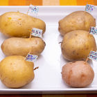 北海道から絶品な「じゃがいも」が6品種も届いたのでホクホク食べ比べしてみた