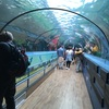 シーライフシドニー水族館【南半球最大級!】