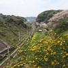 【鎌倉トレランツアー】エリートランナーさんと鎌倉ぐるっと一周トレイル