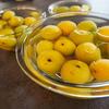 黄色い梅でも美味しい梅シロップができるのか検証してみる