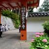 京都宇治市 三室戸寺 紫陽花(アジサイ)開花状況(2017年6月18日)