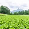 住み込みでの農業バイト始め方完全ガイド【川上村レタスバイト】