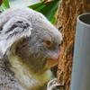 【大人は楽しめない?】名古屋の動物園、東山動植物園に行ってきた感想