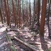 アカヤシオ咲く蕨山