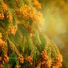 花粉症のスピリチュアル的意味と対処法について