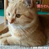 猫王子ヤマトが好きな意外なおもちゃ