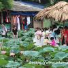 【新型コロナウィルス】気になるベトナムの状況ってどうなの?わかる範囲で書いてみた。