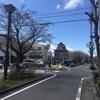 2019年 清洲城の桜の開花状況