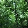 世界遺産「白神山地」は雨でも楽しめる!