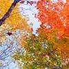 鳴虫山のイロイロな色
