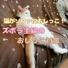 猫がソファにおしっこ!ズボラ主婦のおしっこ対策♡