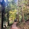 養老渓谷とアクアラインの紅葉狩りドライブ
