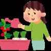 家庭菜園を始めるにあたって気を付けるべき点