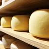 チーズの造り方⑥