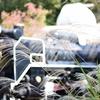 生田緑地の紅葉Part1 うっすら色づく初秋をAPS-Cで単焦点50mm縛り!