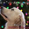 """【アンケートに答えて素敵なプレゼントを!】""""11月15日""""は「いい犬ごはんの日」キャンペーン"""