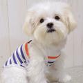 バグガード 虫除け ボーダータンク 犬服(ドッグウェア) | 犬と生活(いぬとせいかつ)