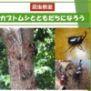 2019年5月3日(金) 【昆虫教室】カブトムシとともだちになろう!