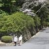 石上神宮[いそのかみじんぐう]外苑公園の桜