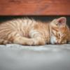 『寝汗』がひどい原因、理由7選【対策法、アルコール、ベッド、生理、布団、季節、冬】