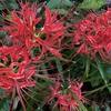UR敷地内の秋花は美しいが、残念ながら裏がある。URの共益費の闇。