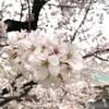 この春、オススメの文房具!使いやすいシャープペンシルベスト5選