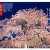 2021年 京都の桜をサイクリングで巡る4日間⑤