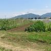 農園日誌ー社会的存在価値ーPARTⅦ-自然循環農法の実践