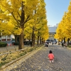 慶應日吉キャンパスのイチョウがめちゃくちゃキレイ