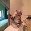 招き猫スタイル