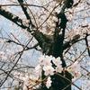 桜尽くしの一日