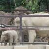 #上野動物園#アルン