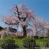 京都の桜2019-2