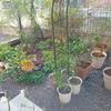 庭・ガーデニングを楽しみたい方が家を買うときに注意すること