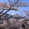 番外編  勝山城(都留市) 桜祭り