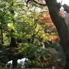 新宿御苑で子連れ紅葉見物がサイコー、なお話。