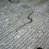 新しいヘビ発見。調べたら無毒っぽい?